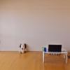 一年の一人暮らしで物が消えた。女ミニマリストの部屋Before&After